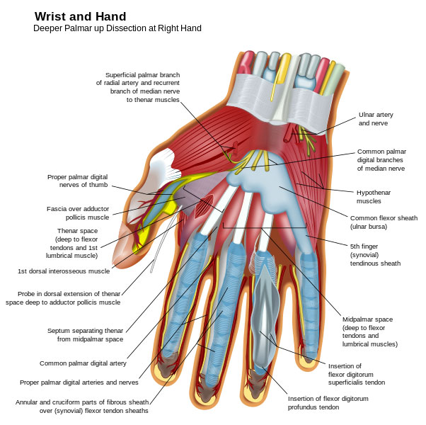 Hand Injuries Hand Surgery Colorado Hand Specialist
