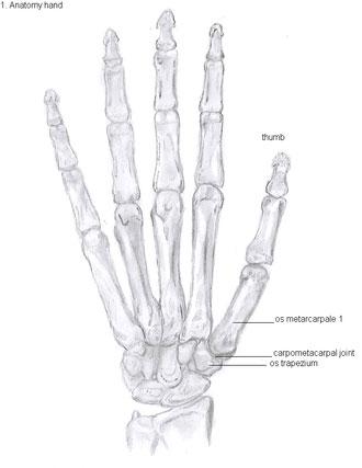 Base Of The Thumb Arthritis 1st Cmc Arthritis Treatment Colorado